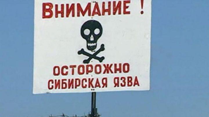 Осторожно – сибирская язва!