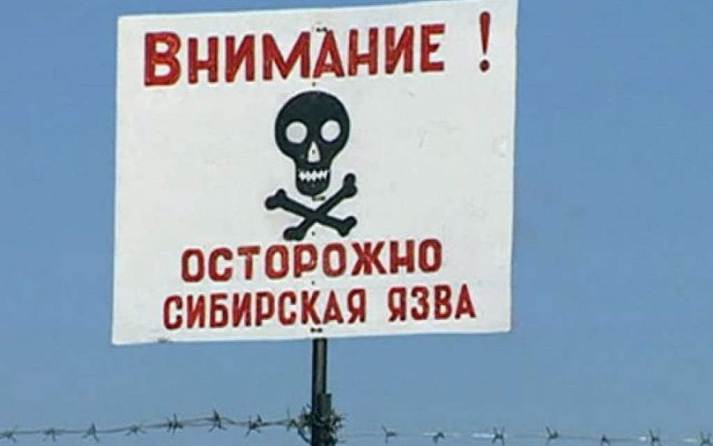 Осторожно — сибирская язва!